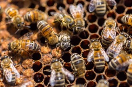 Opendag bijenpaviljoen Vaeshartelt