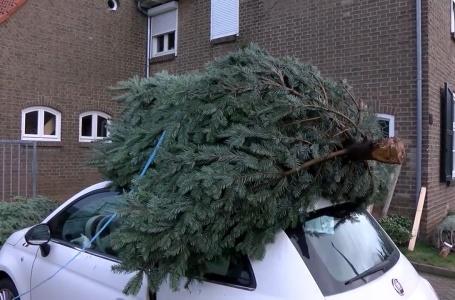 Kerstbomen verkoop volop in de gang