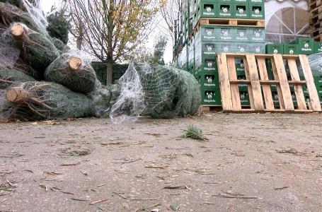 """Kerstboomverkoop: """"nog nooit gebeurd"""""""