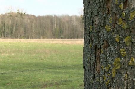 Driehonderd bomen geadopteerd voor Herdenkingsbos