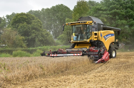 Het graan oogsten in volle gang